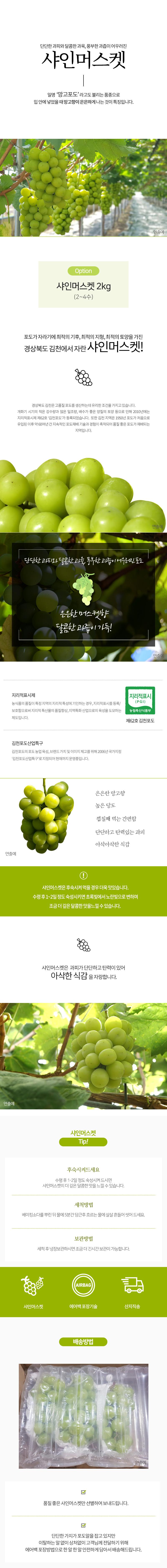샤인머스켓 웹기술서롯데20200901